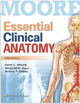 Essential Clinical Anatomy 5th Edition Kindle Edition Pdf